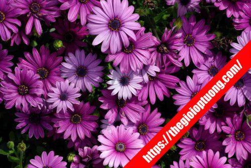 Tranh dán tường hoa đẹp nhất - Tranh tường 3D thiên nhiên
