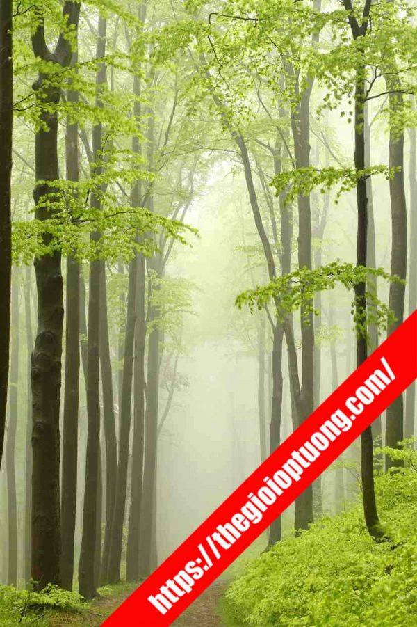 Tranh dán tường rừng cây 3D - Tranh tường thiên nhiên đẹp