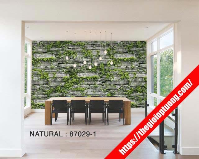 Thiết kế thi công giấy dán tường đẹp cho văn phòng, showroom, nhà hàng...